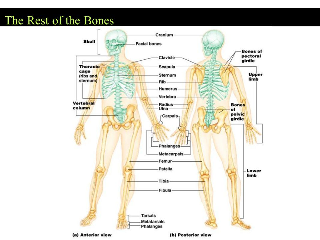 The Rest of the Bones