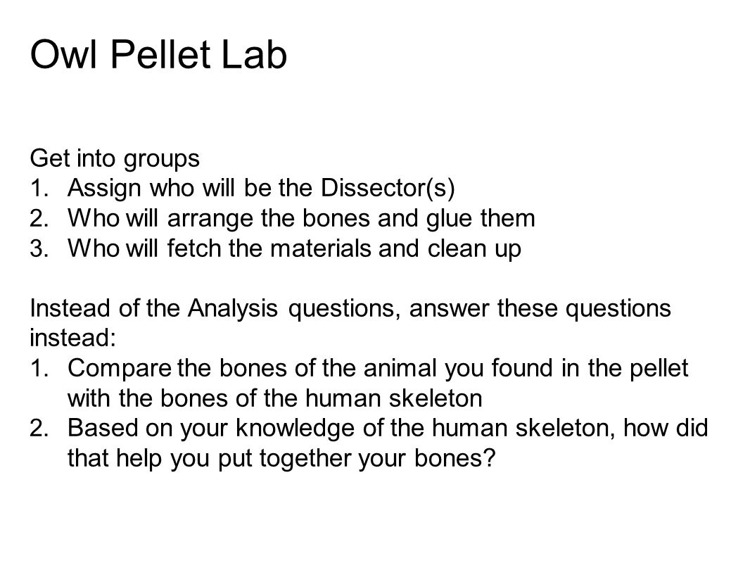 Owl Pellet Lab Get into groups 1. Assign who will be the Dissector(s) 2. Who will arrange the bones and glue them 3. Who will fetch the materials and