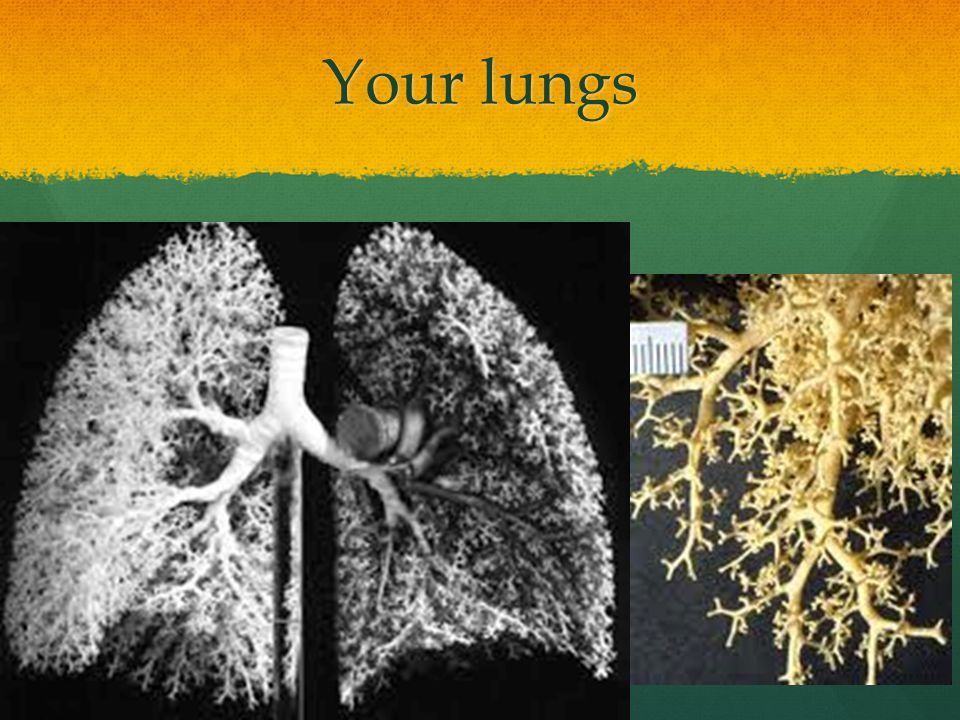Your lungs