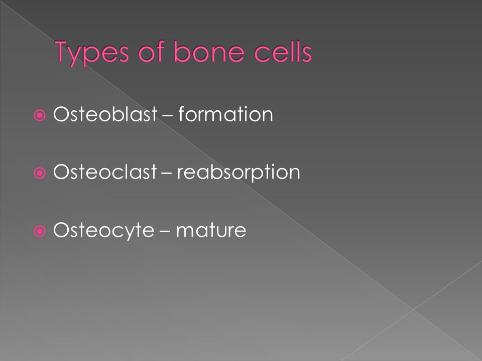  Osteoblast – formation  Osteoclast – reabsorption  Osteocyte – mature