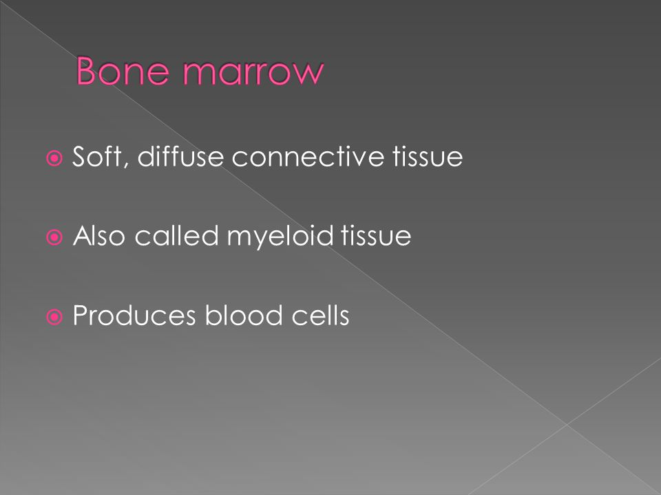  Soft, diffuse connective tissue  Also called myeloid tissue  Produces blood cells