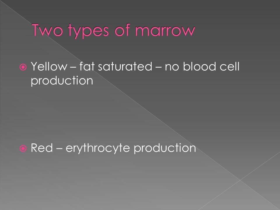  Yellow – fat saturated – no blood cell production  Red – erythrocyte production