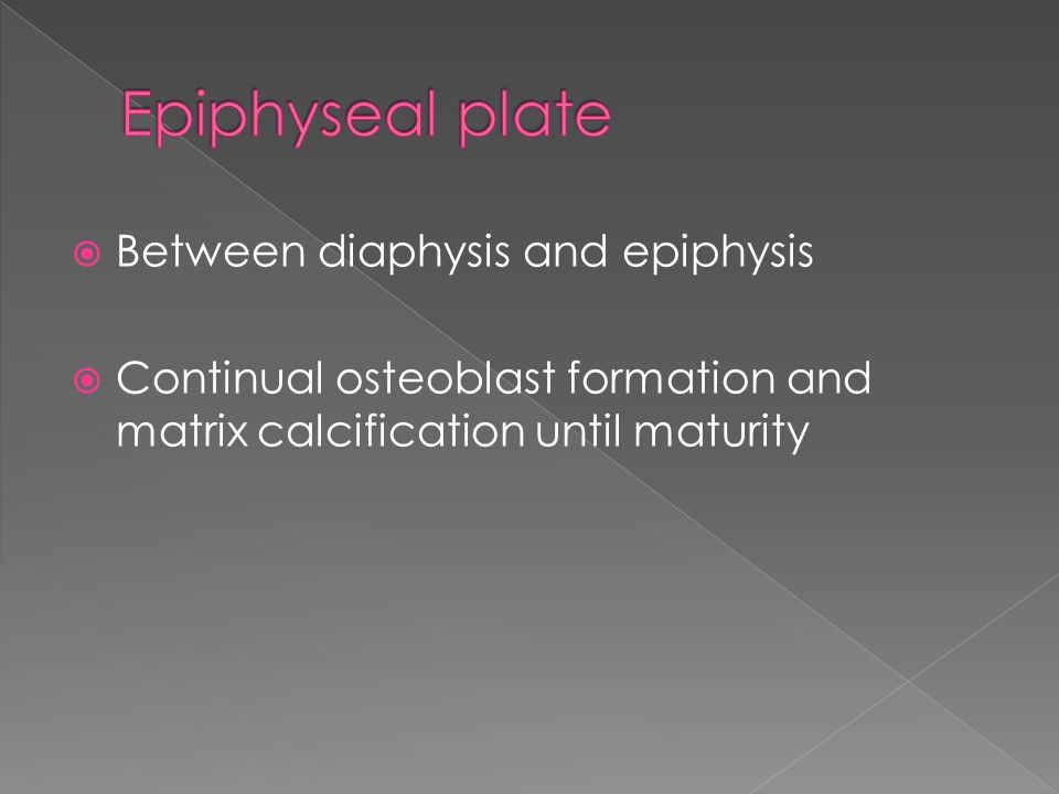  Between diaphysis and epiphysis  Continual osteoblast formation and matrix calcification until maturity