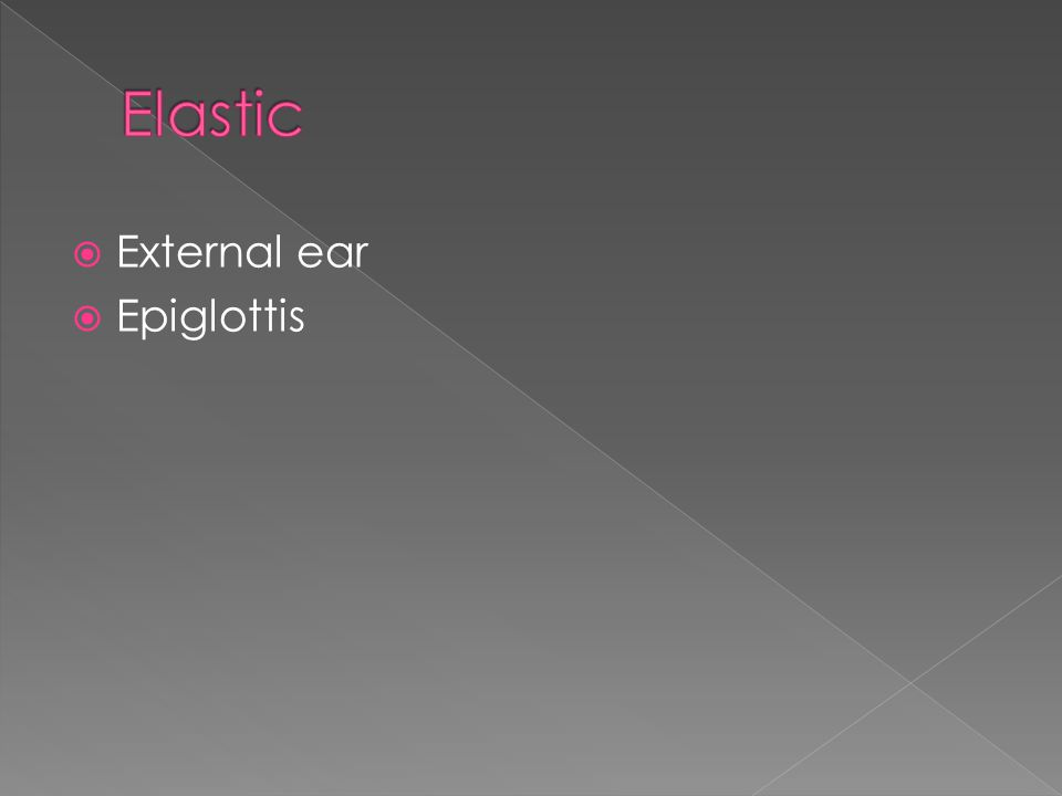  External ear  Epiglottis