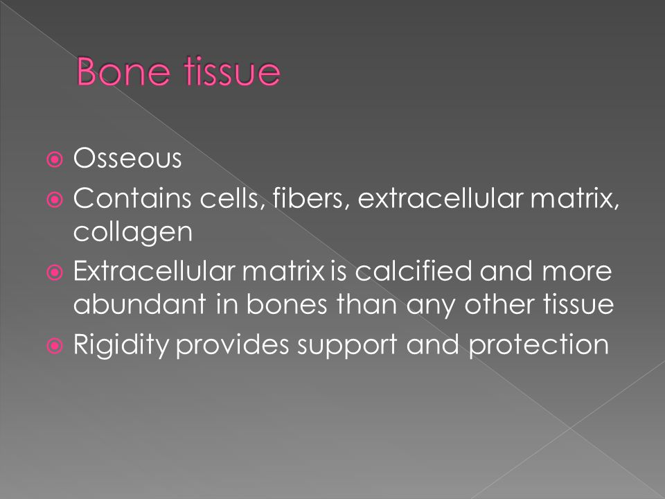  Osseous  Contains cells, fibers, extracellular matrix, collagen  Extracellular matrix is calcified and more abundant in bones than any other tissue  Rigidity provides support and protection