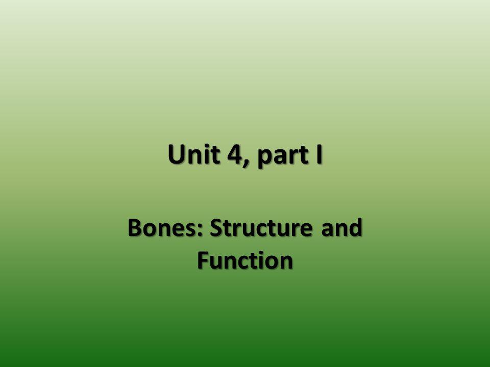Unit 4, part I Bones: Structure and Function