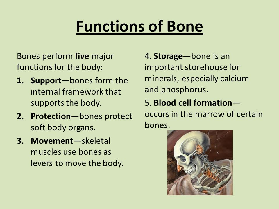 Functions of Bone Bones perform five major functions for the body: 1.Support—bones form the internal framework that supports the body.