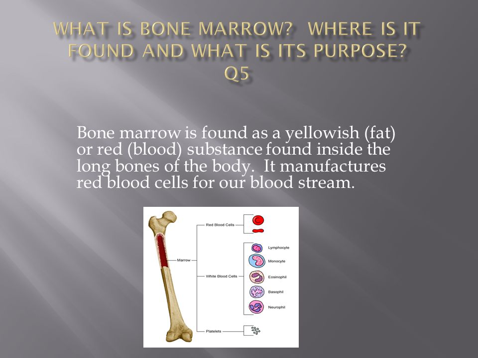  Long bones are hollow to reduce weight and to allow for blood cell production in the bone marrow housed in its hollow interior.