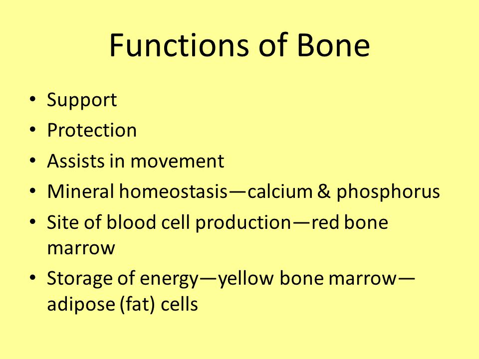 Functions of Bone Support Protection Assists in movement Mineral homeostasis—calcium & phosphorus Site of blood cell production—red bone marrow Storage of energy—yellow bone marrow— adipose (fat) cells