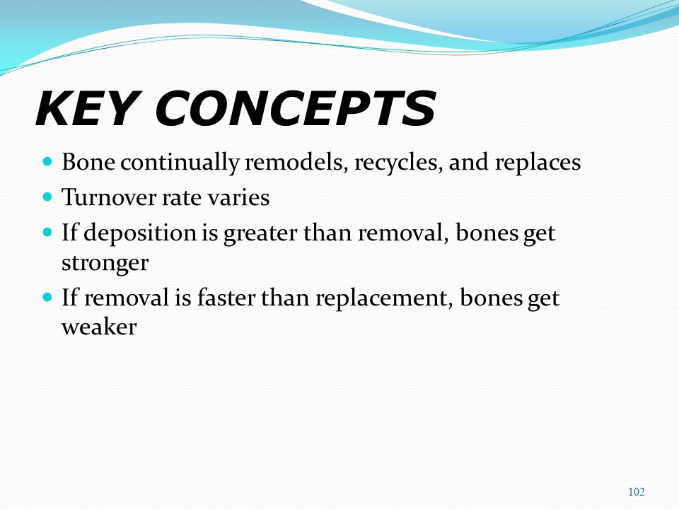 KEY CONCEPTS Bone continually remodels, recycles, and replaces Turnover rate varies If deposition is greater than removal, bones get stronger If remov