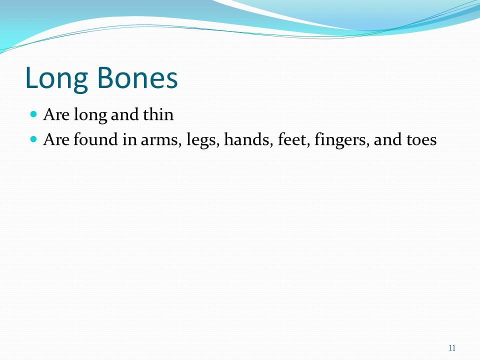 Long Bones Are long and thin Are found in arms, legs, hands, feet, fingers, and toes 11