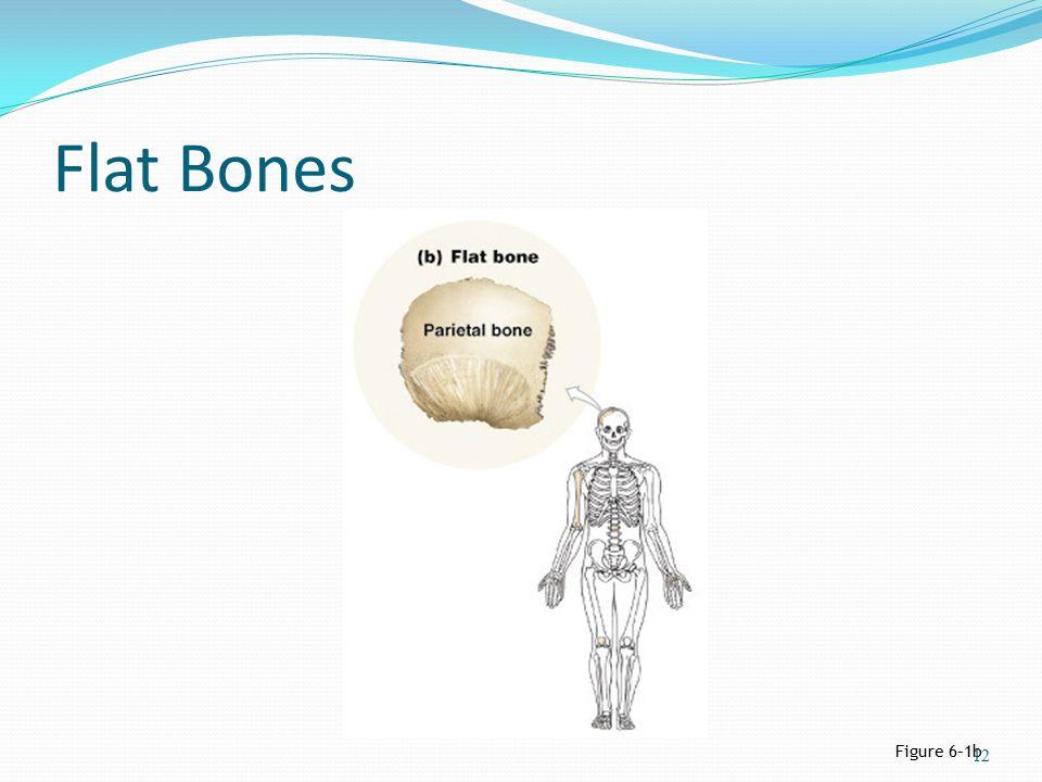 Flat Bones Figure 6–1b 12