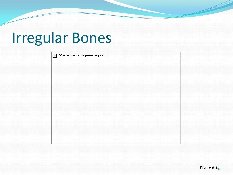 Irregular Bones Figure 6–1d 16