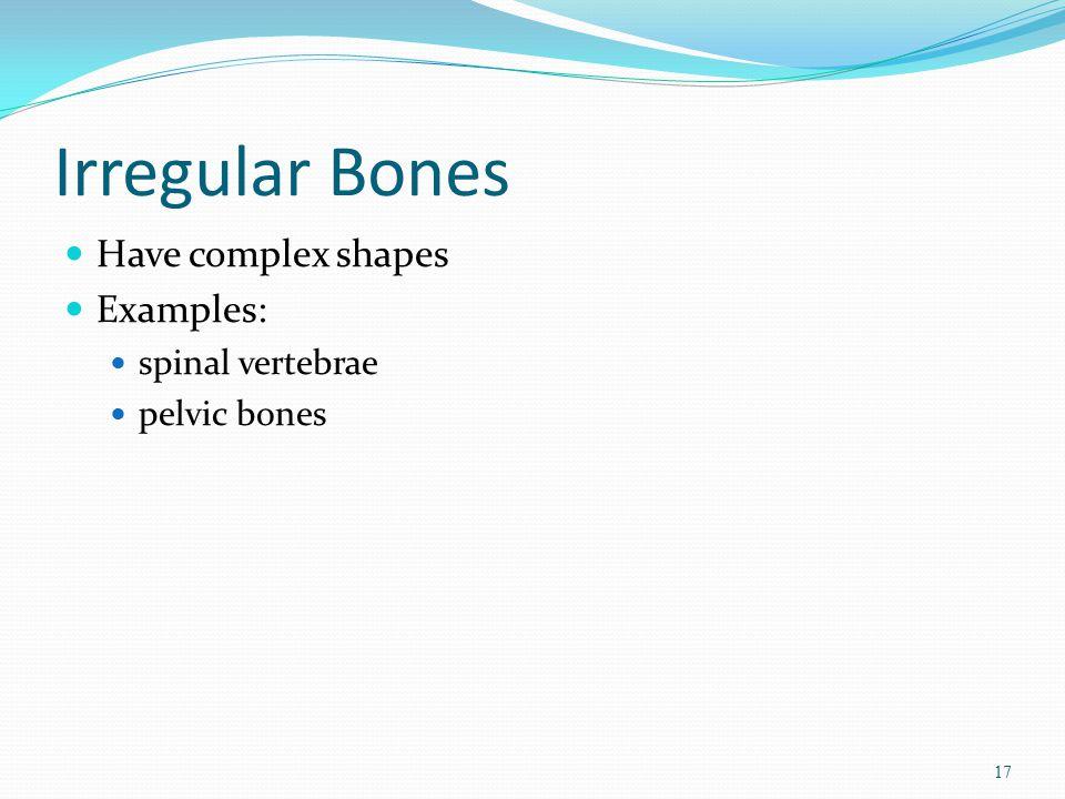 Irregular Bones Have complex shapes Examples: spinal vertebrae pelvic bones 17
