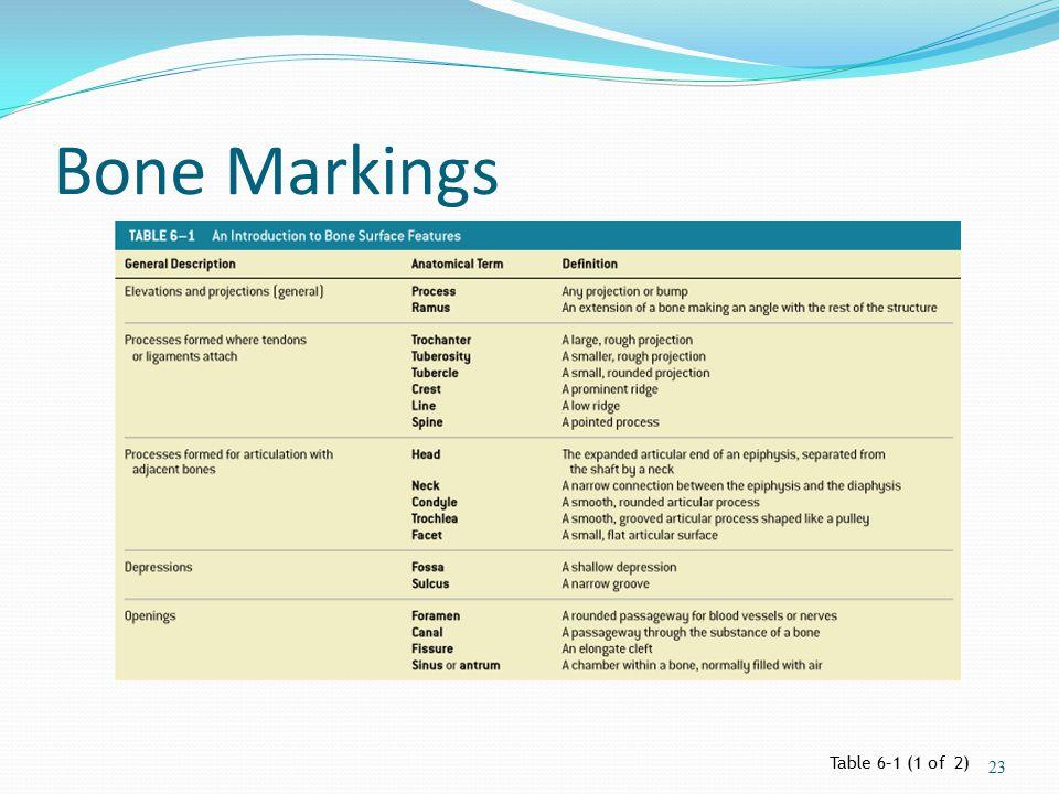 Bone Markings Table 6–1 (1 of 2) 23