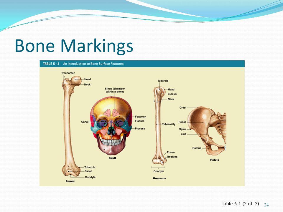 Bone Markings Table 6–1 (2 of 2) 24