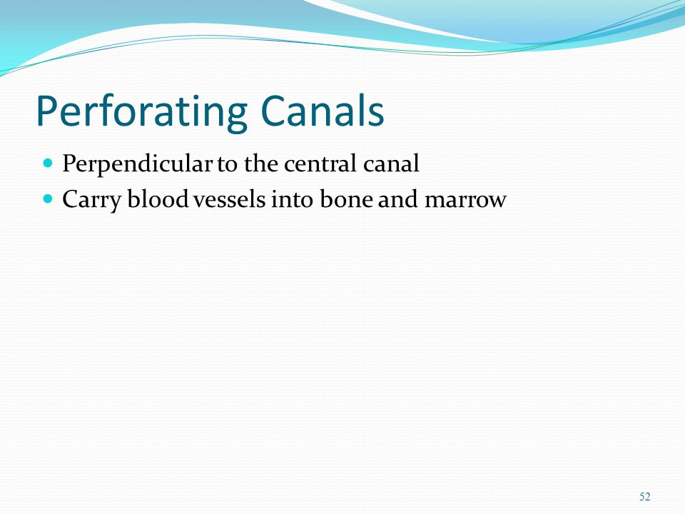 Perforating Canals Perpendicular to the central canal Carry blood vessels into bone and marrow 52