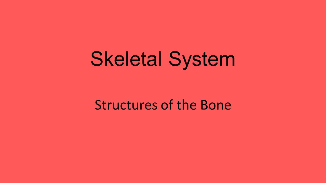 Skeletal System Structures of the Bone