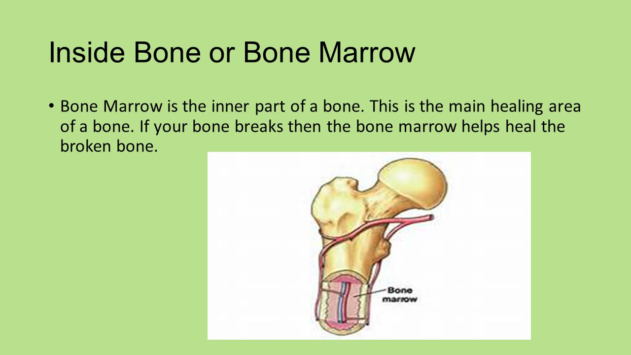 Inside Bone or Bone Marrow Bone Marrow is the inner part of a bone.