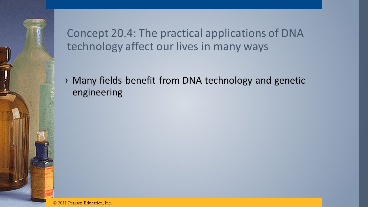 Concept 20.4: The practical applications of DNA technology affect our lives in many ways ›Many fields benefit from DNA technology and genetic engineer