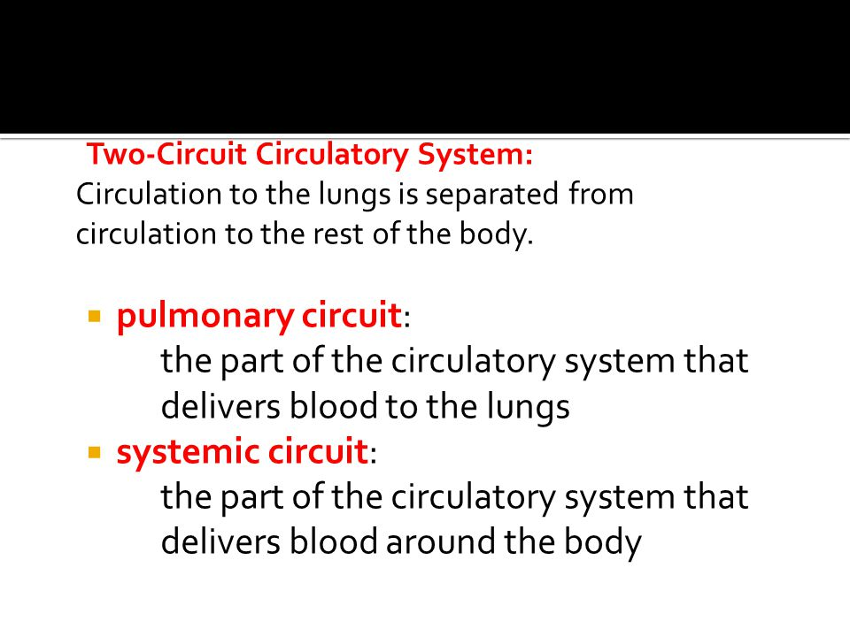 Two-Circuit Circulatory System: Circulation to the lungs is separated from circulation to the rest of the body.