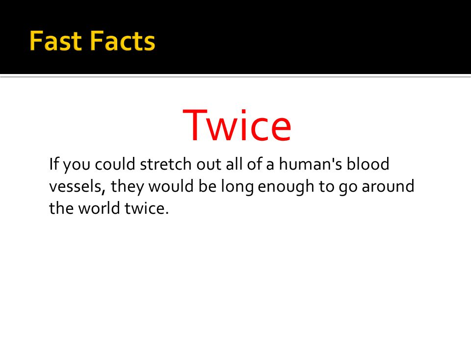 Twice If you could stretch out all of a human s blood vessels, they would be long enough to go around the world twice.