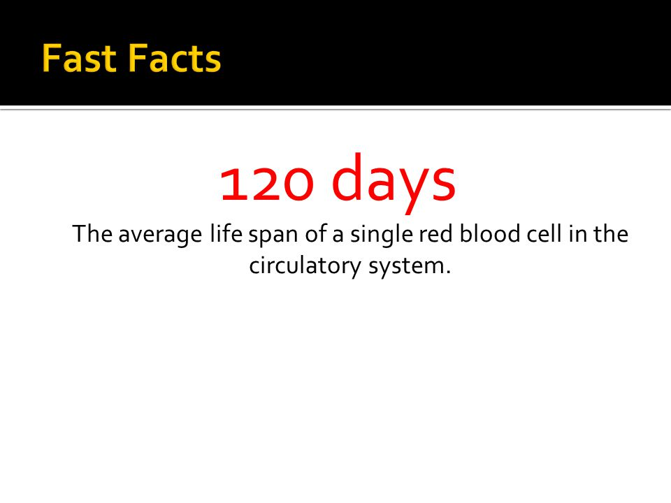 120 days The average life span of a single red blood cell in the circulatory system.