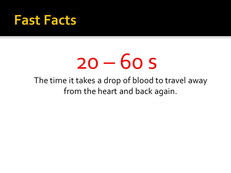 20 – 60 s The time it takes a drop of blood to travel away from the heart and back again.