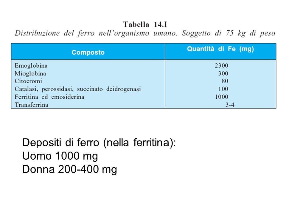 Depositi di ferro (nella ferritina): Uomo 1000 mg Donna 200-400 mg