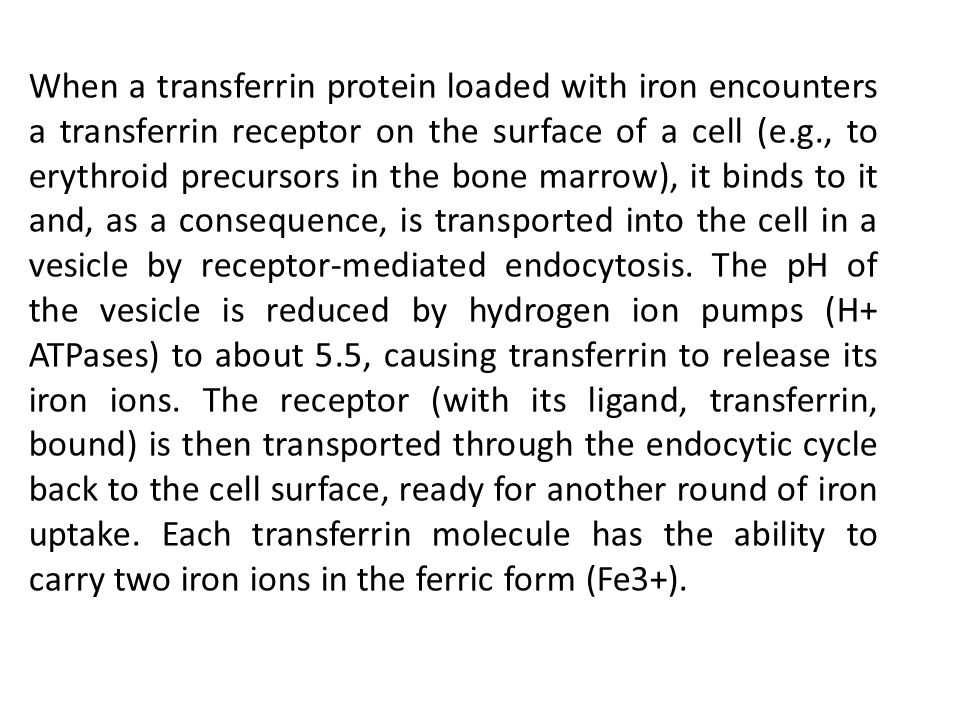 When a transferrin protein loaded with iron encounters a transferrin receptor on the surface of a cell (e.g., to erythroid precursors in the bone marr