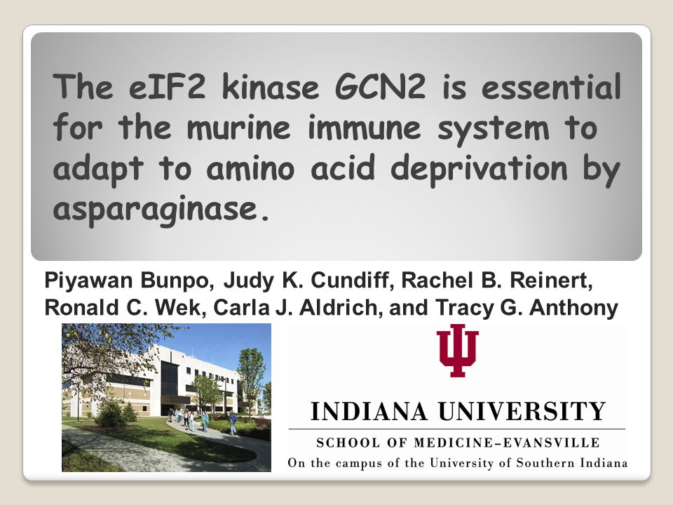 The eIF2 kinase GCN2 is essential for the murine immune system to adapt to amino acid deprivation by asparaginase.