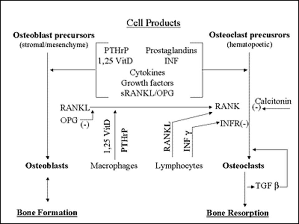 Ambient calcium acting through the calcium sensing receptor (CaSR) Vitamin D [1,25(OH)2D] Ambient phosphorus Other Table 17.