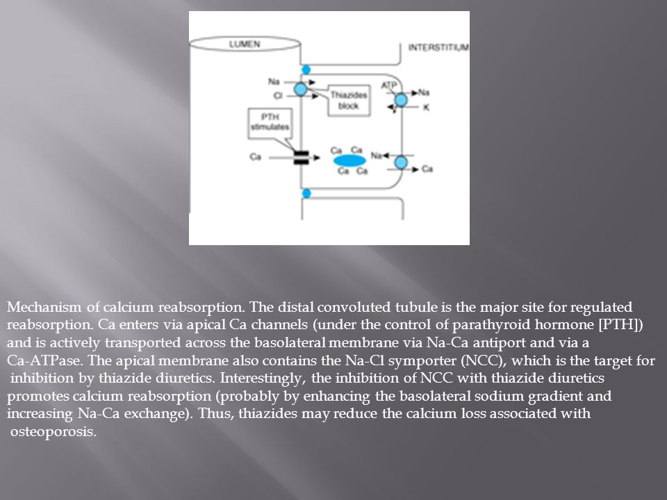 Mechanism of calcium reabsorption.
