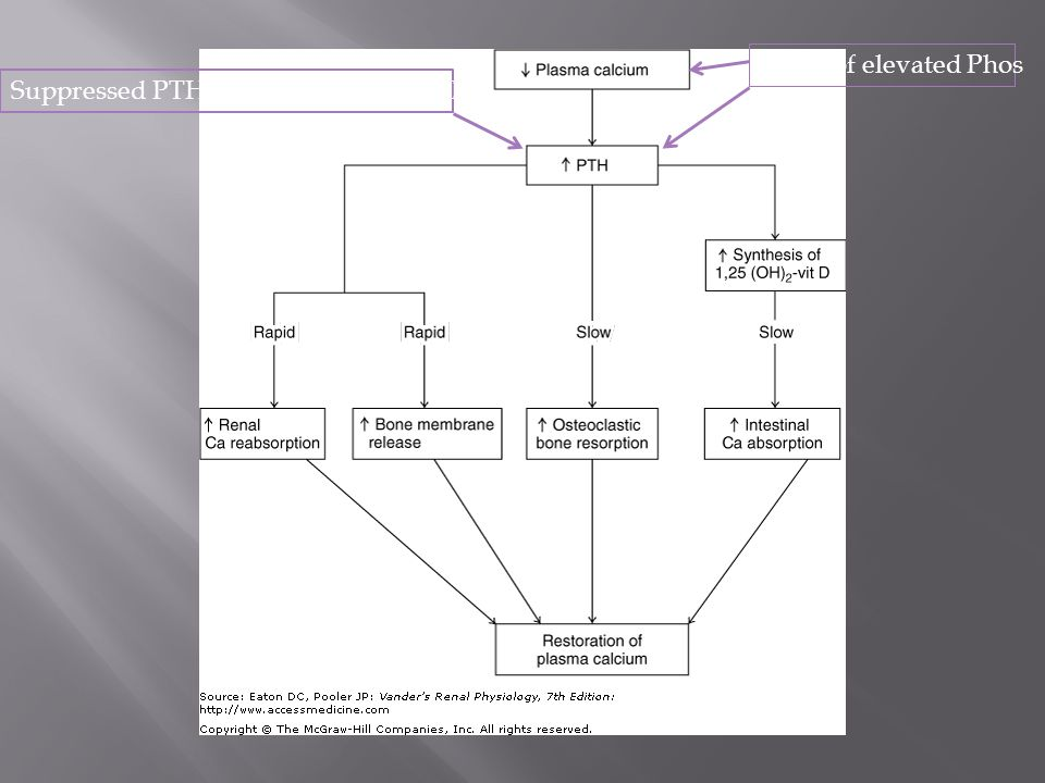 Pathophysiology of Disease > Chapter 16.