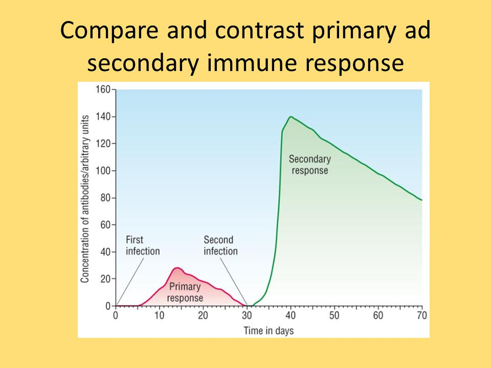 Compare and contrast primary ad secondary immune response