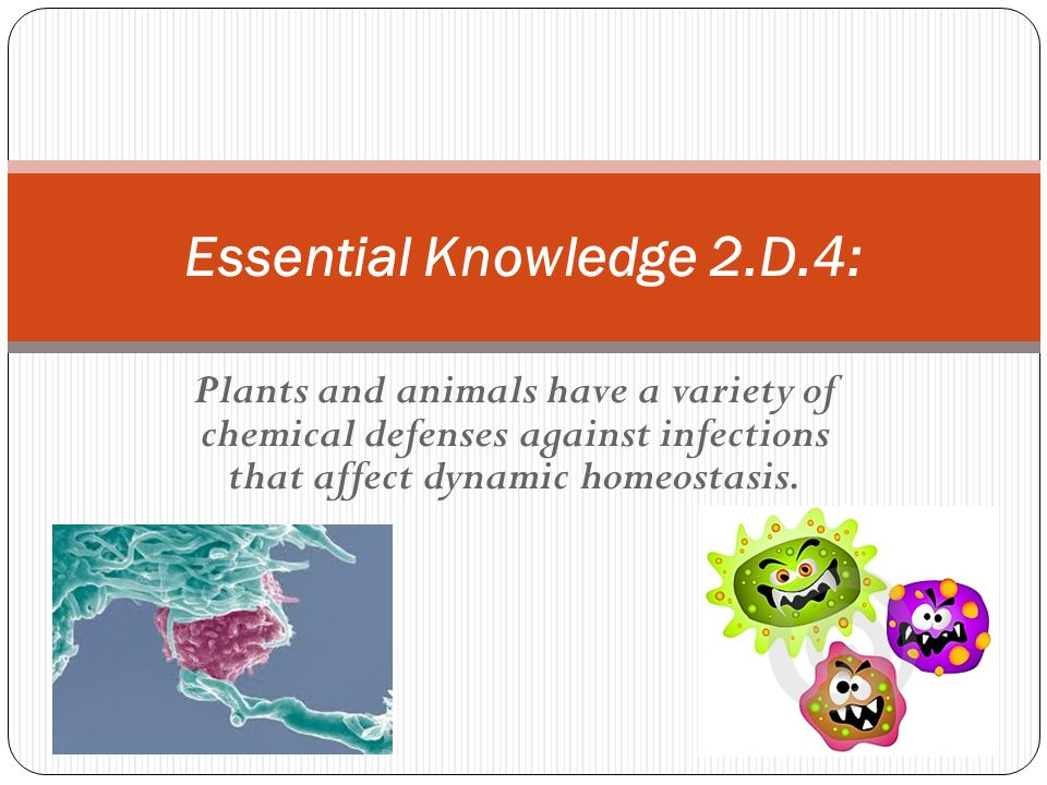 Plants and animals have a variety of chemical defenses against infections that affect dynamic homeostasis. Essential Knowledge 2.D.4: