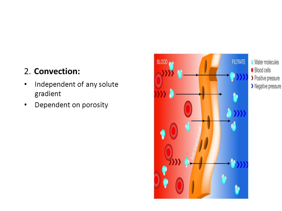 2. Convection: Independent of any solute gradient Dependent on porosity