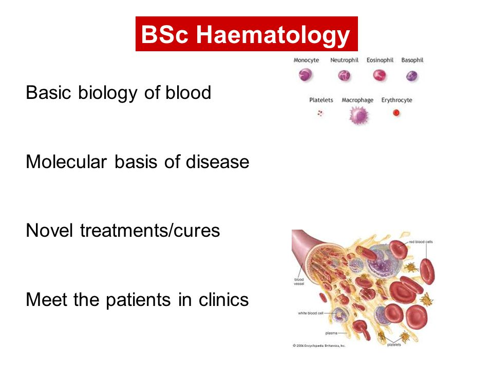 BSc Haematology Basic biology of blood Molecular basis of disease Novel treatments/cures Meet the patients in clinics