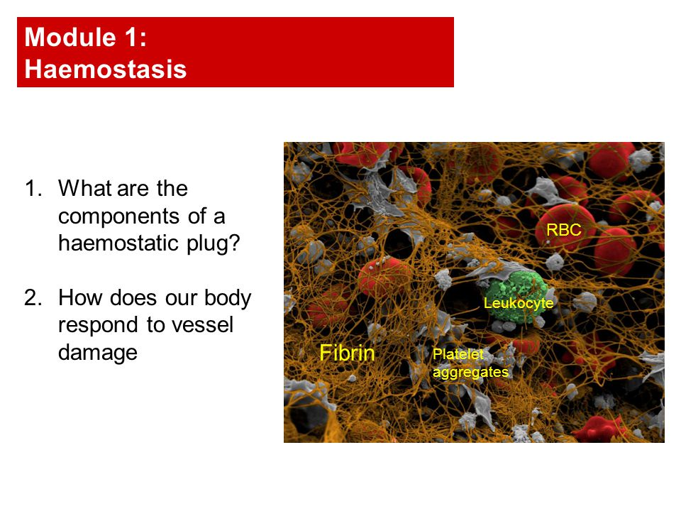 1.What are the components of a haemostatic plug.