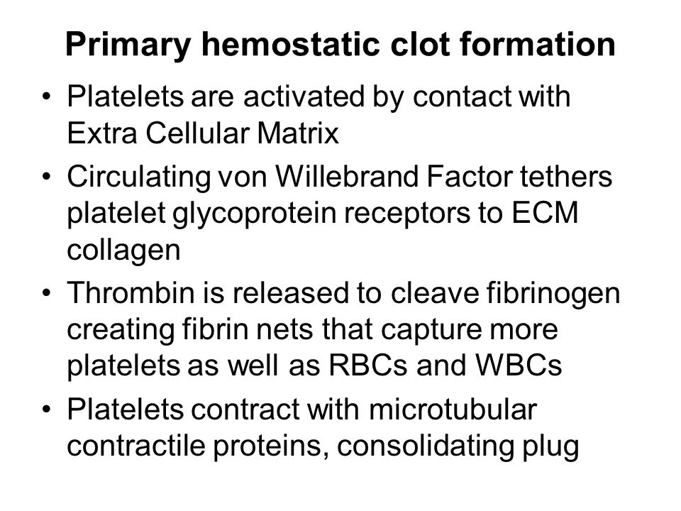 Primary hemostatic clot formation Platelets are activated by contact with Extra Cellular Matrix Circulating von Willebrand Factor tethers platelet glycoprotein receptors to ECM collagen Thrombin is released to cleave fibrinogen creating fibrin nets that capture more platelets as well as RBCs and WBCs Platelets contract with microtubular contractile proteins, consolidating plug