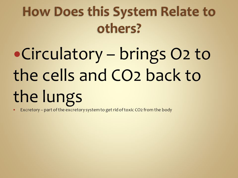 Circulatory – brings O2 to the cells and CO2 back to the lungs Excretory – part of the excretory system to get rid of toxic CO2 from the body