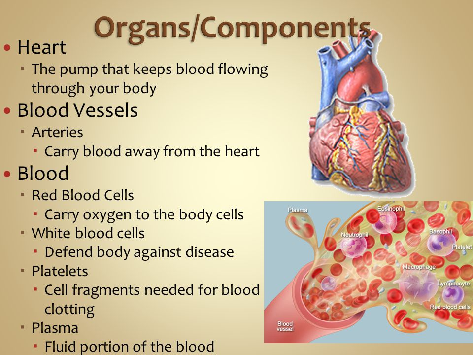 Heart  The pump that keeps blood flowing through your body Blood Vessels  Arteries  Carry blood away from the heart Blood  Red Blood Cells  Carry oxygen to the body cells  White blood cells  Defend body against disease  Platelets  Cell fragments needed for blood clotting  Plasma  Fluid portion of the blood