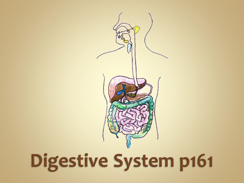 The Circulatory Systems brings oxygen, nutrients and hormones to cells; removes cell wastes; regulates body temperature