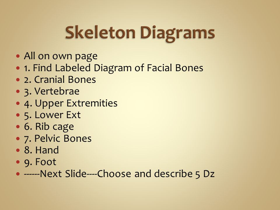 All on own page 1. Find Labeled Diagram of Facial Bones 2.