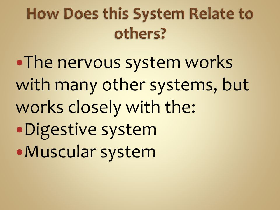 The nervous system works with many other systems, but works closely with the: Digestive system Muscular system