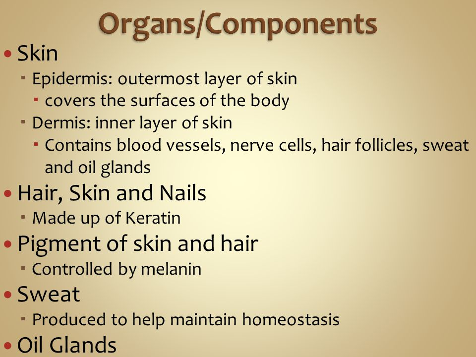 Skin  Epidermis: outermost layer of skin  covers the surfaces of the body  Dermis: inner layer of skin  Contains blood vessels, nerve cells, hair follicles, sweat and oil glands Hair, Skin and Nails  Made up of Keratin Pigment of skin and hair  Controlled by melanin Sweat  Produced to help maintain homeostasis Oil Glands