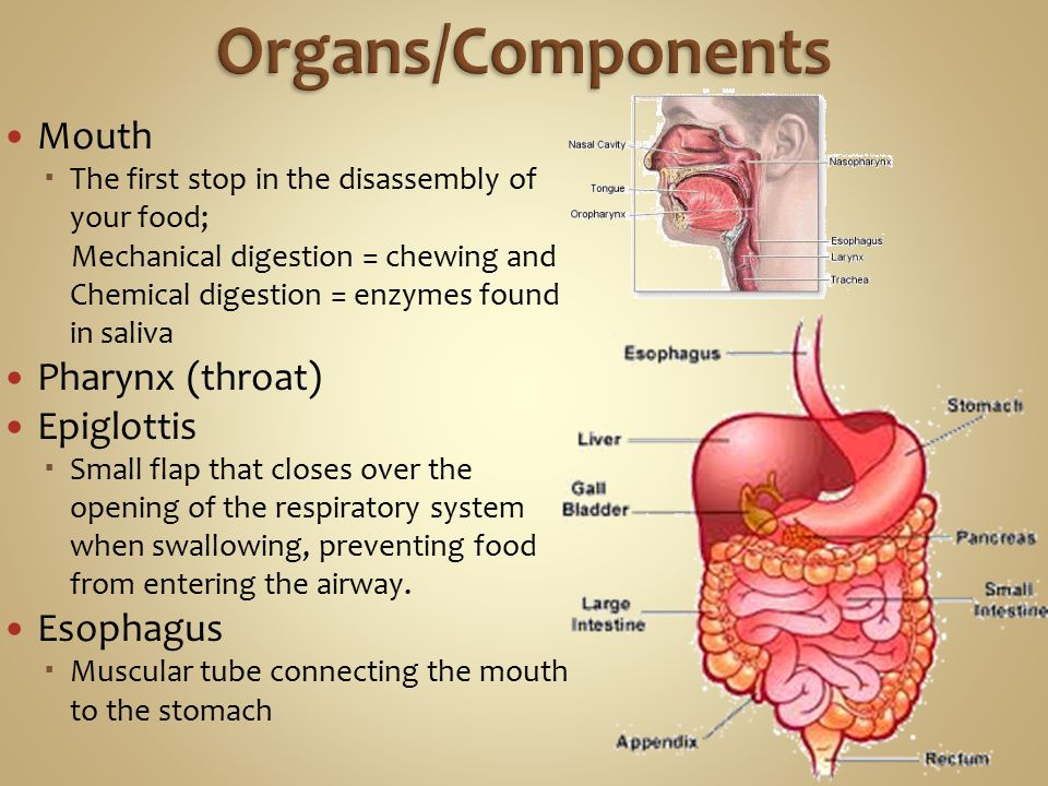 The reproductive system works most closely with the endocrine system (hormones)