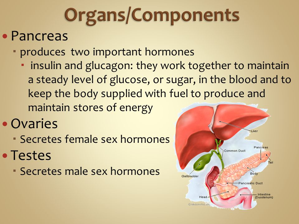Pancreas  produces two important hormones  insulin and glucagon: they work together to maintain a steady level of glucose, or sugar, in the blood and to keep the body supplied with fuel to produce and maintain stores of energy Ovaries  Secretes female sex hormones Testes  Secretes male sex hormones