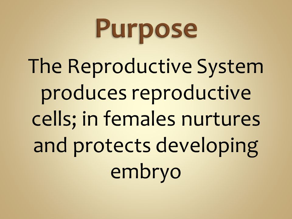 The Reproductive System produces reproductive cells; in females nurtures and protects developing embryo