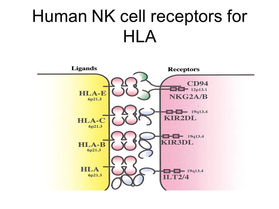 Human NK cell receptors for HLA